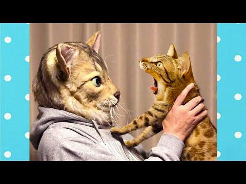 Прикольные видео 😻 Кошек дразнят всегда