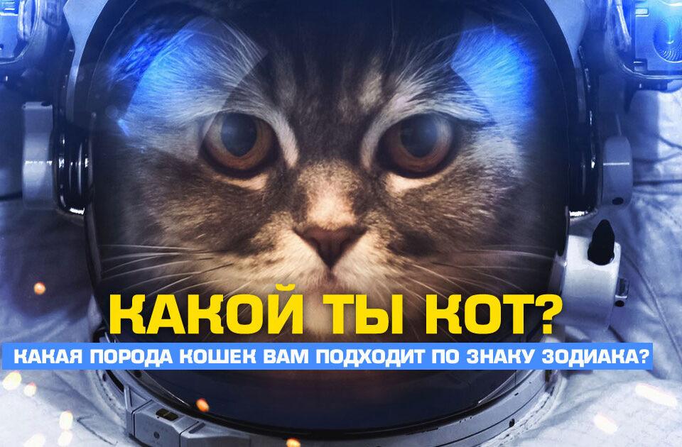 Какая порода кошек подходит по знаку зодиака?