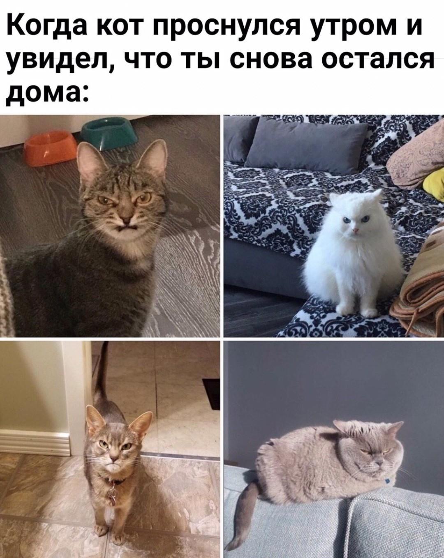 Когда кот проснулся утром и увидел, что ты снова остался дома