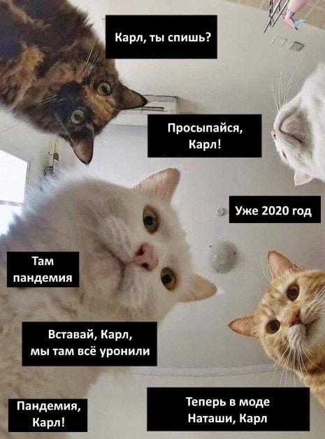 Мем Наташа и коты - самая большая подборка