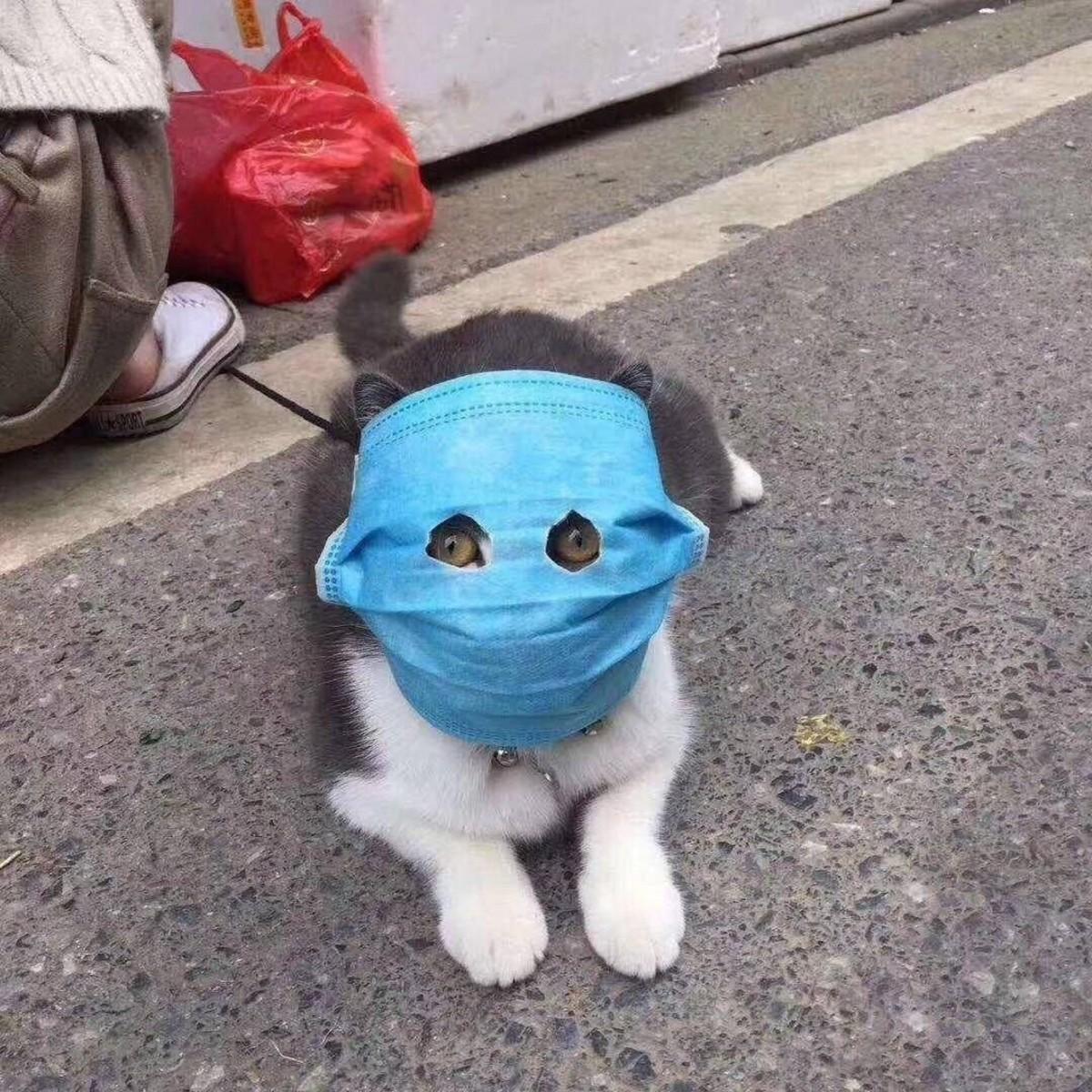Кот в медицинской маске (картинка)