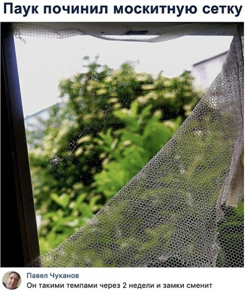 Картинка: Паук почистил москитную сетку