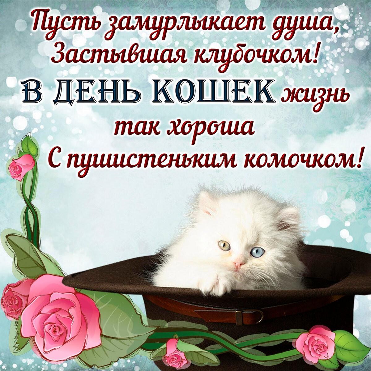 Международный день кошки