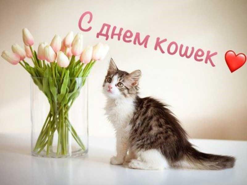 Открытка с днём кошек