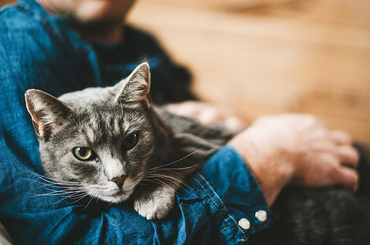 Как кошки стали домашними?