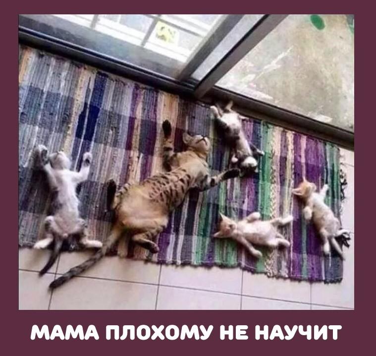 кошка с котятами: мама плохому не научит