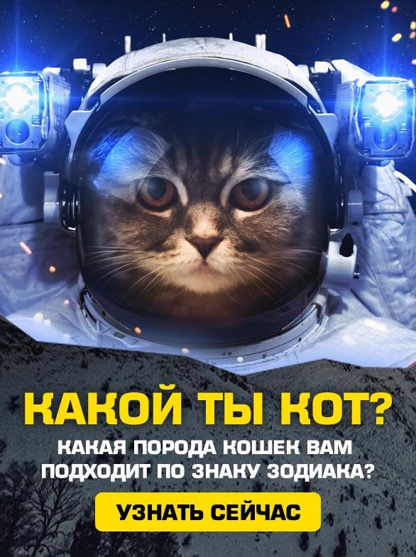 Какая кошка вам подходит?