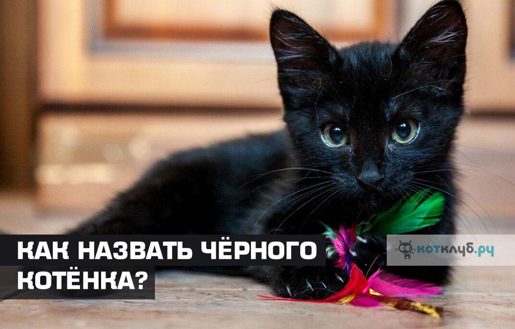 Имена для чёрных кошек и котов