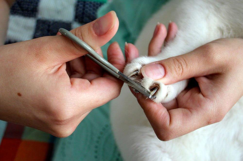 Стричь ли когти коту?