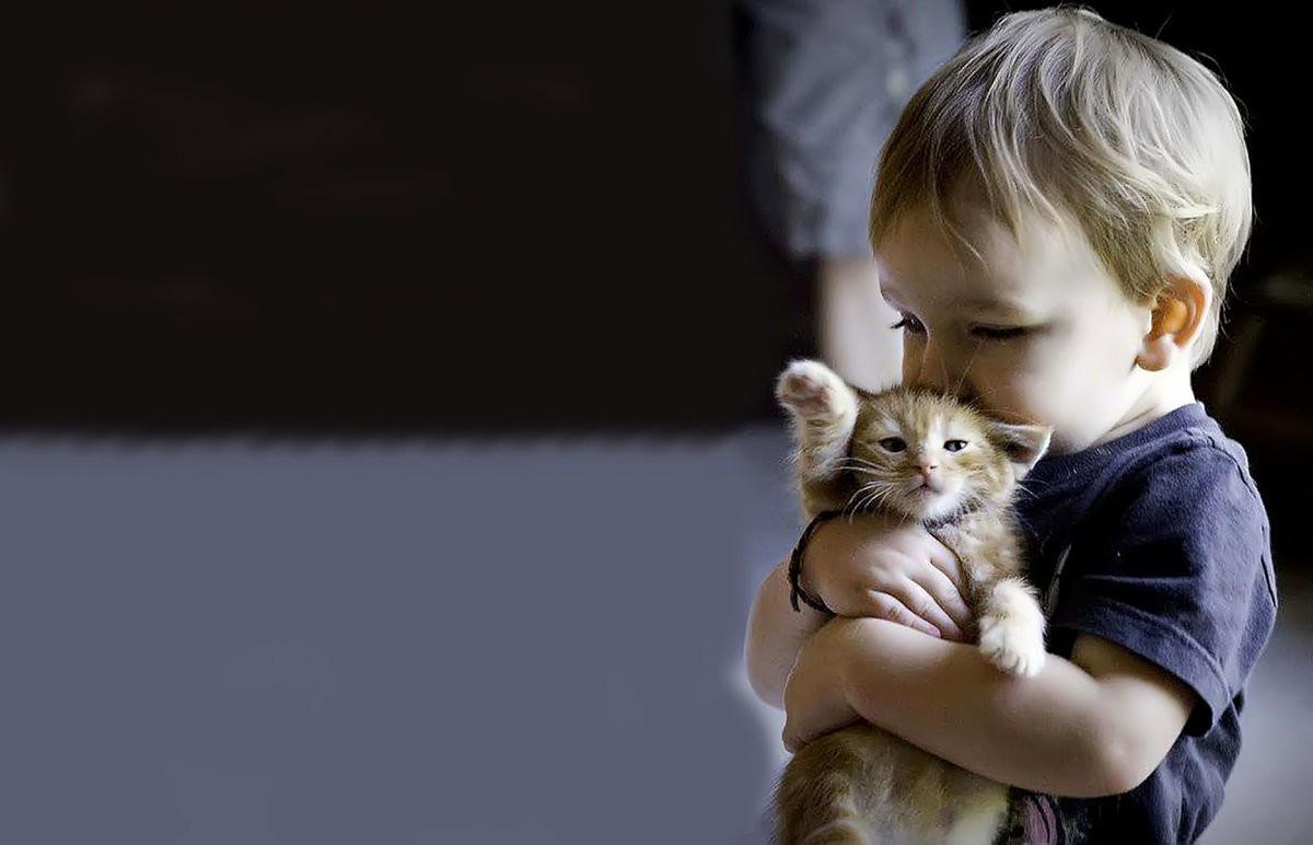 Как выбрать котёнка ребёнку?