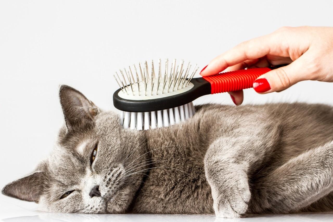 Как правильно вычёсывать кошку