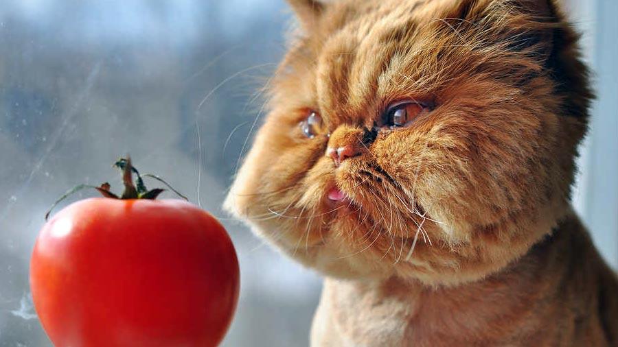 Можно ли кошке давать фрукты?