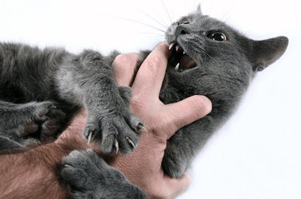 Как отучить кошку кусаться?