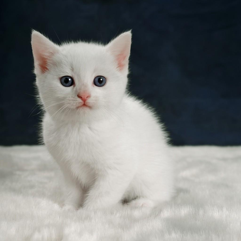 Имена для белых кошек и котов