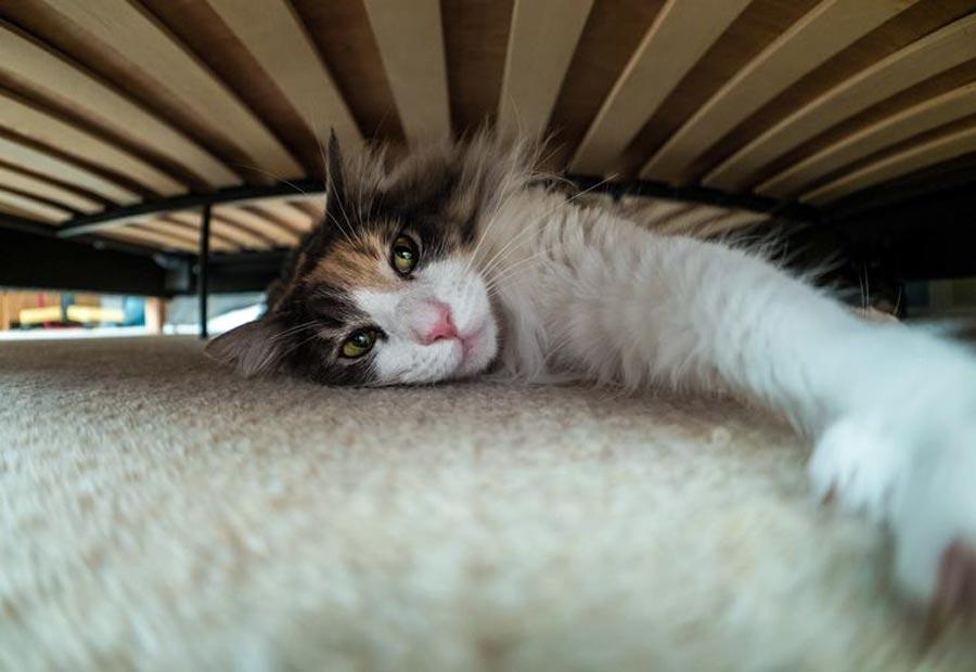 Кошка спит и прячется под кроватью