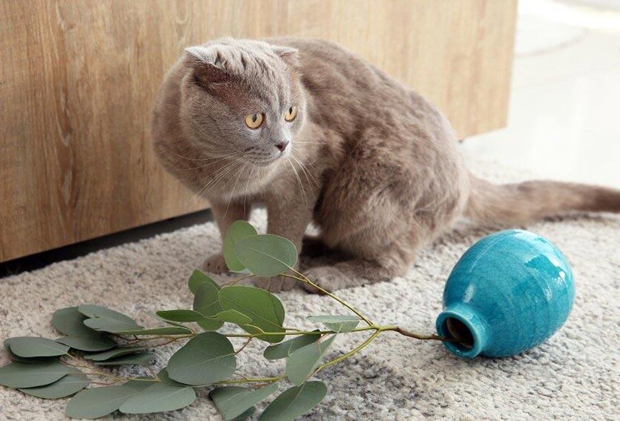 Кошка переворачивает миску с водой и едой