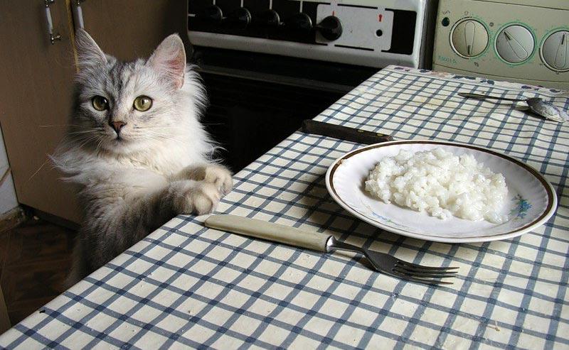 Можно ли кошкам рис?