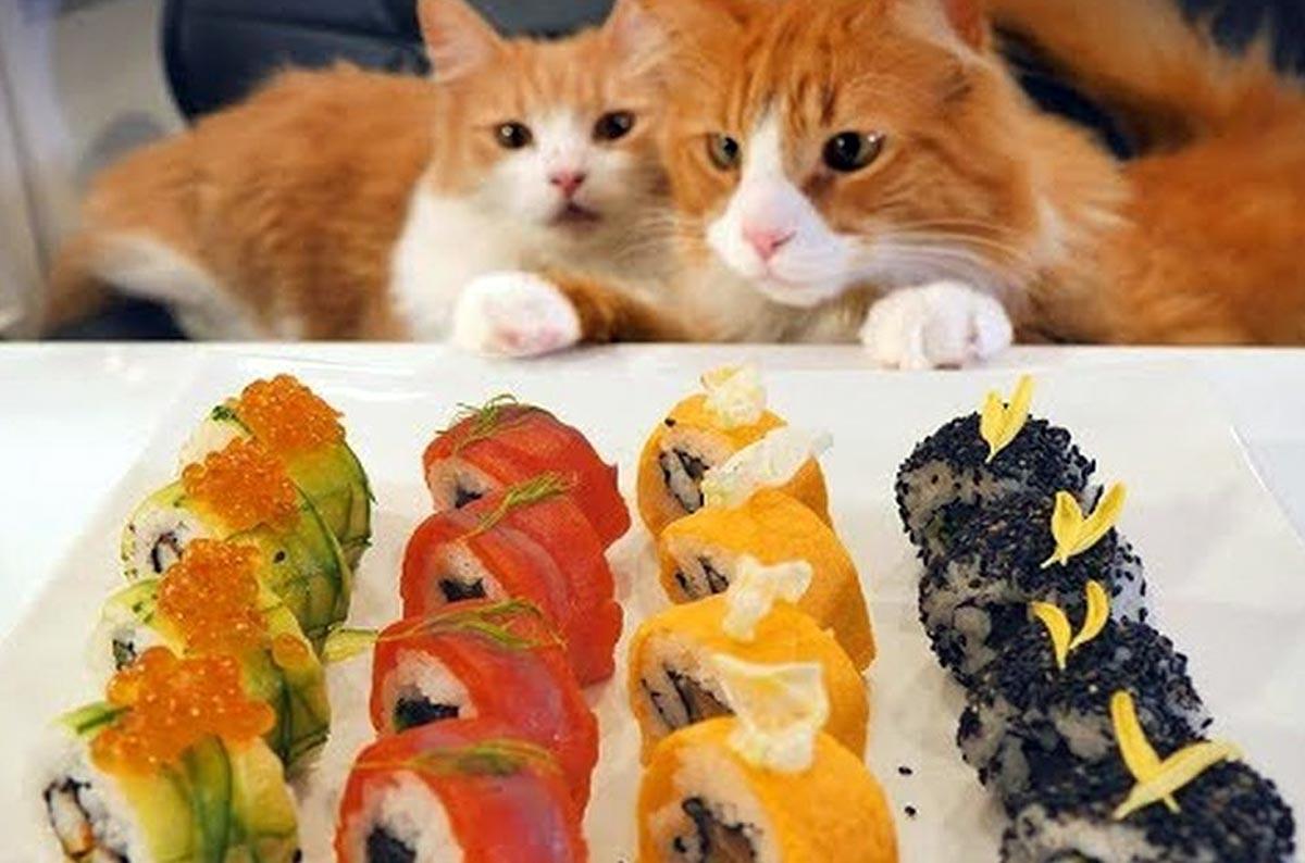 Могут ли кошки есть суши?