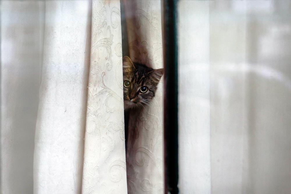 Кошка лазает по шторам