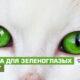 Корейские имена для кошек и котов