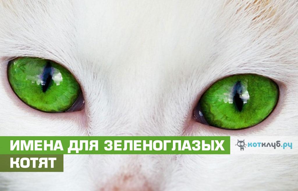 Имена для кошек и котов с зелёными глазами