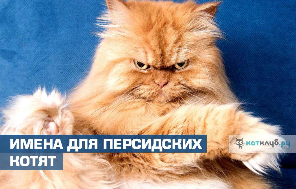 Имена для персидских кошек и котов