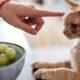 Можно ли кошкам шоколад?