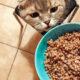Можно кошкам давать белый и чёрный хлеб?