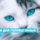 Имена для трёхцветных кошек и котов