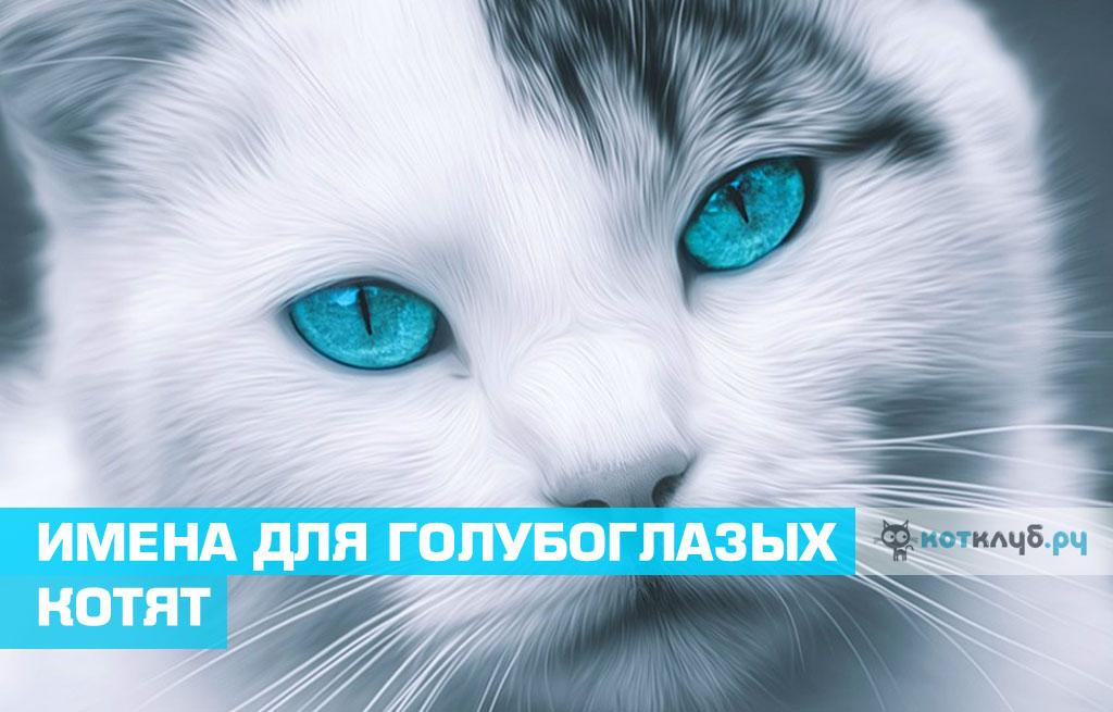 Имена для голубоглазых кошек и котов