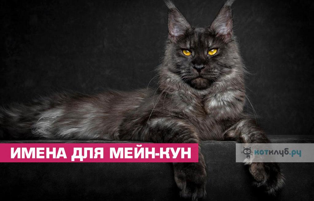 Имена для котов и кошек Мейн-кун