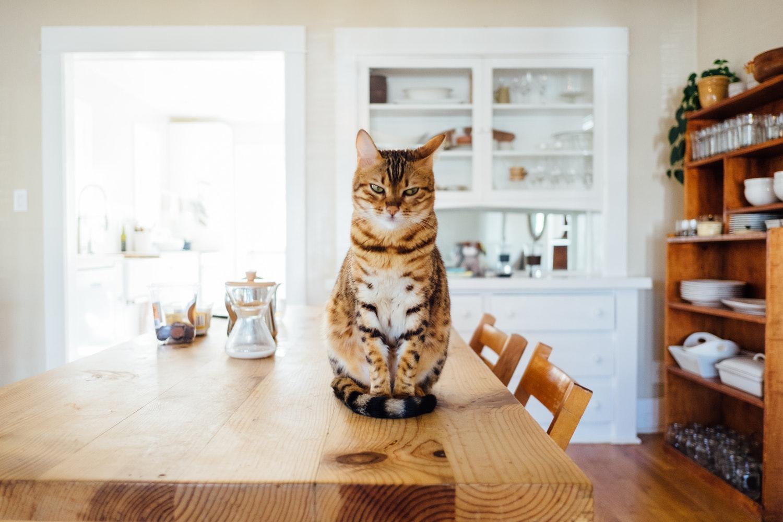 Как отучить кошку лазить по столам на кухне?