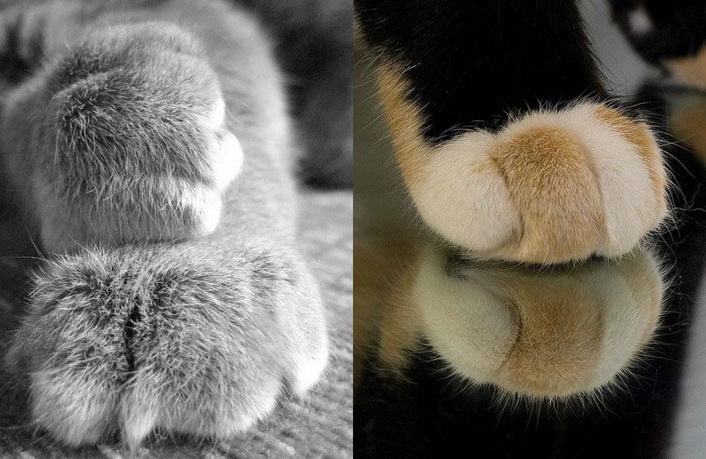 Почему у кошки холодные лапы?