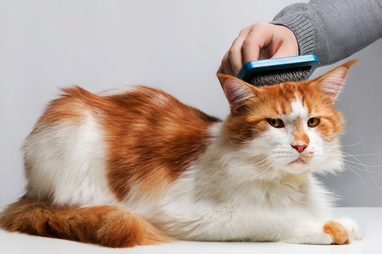 Почему кошки линяют и что с этим делать?