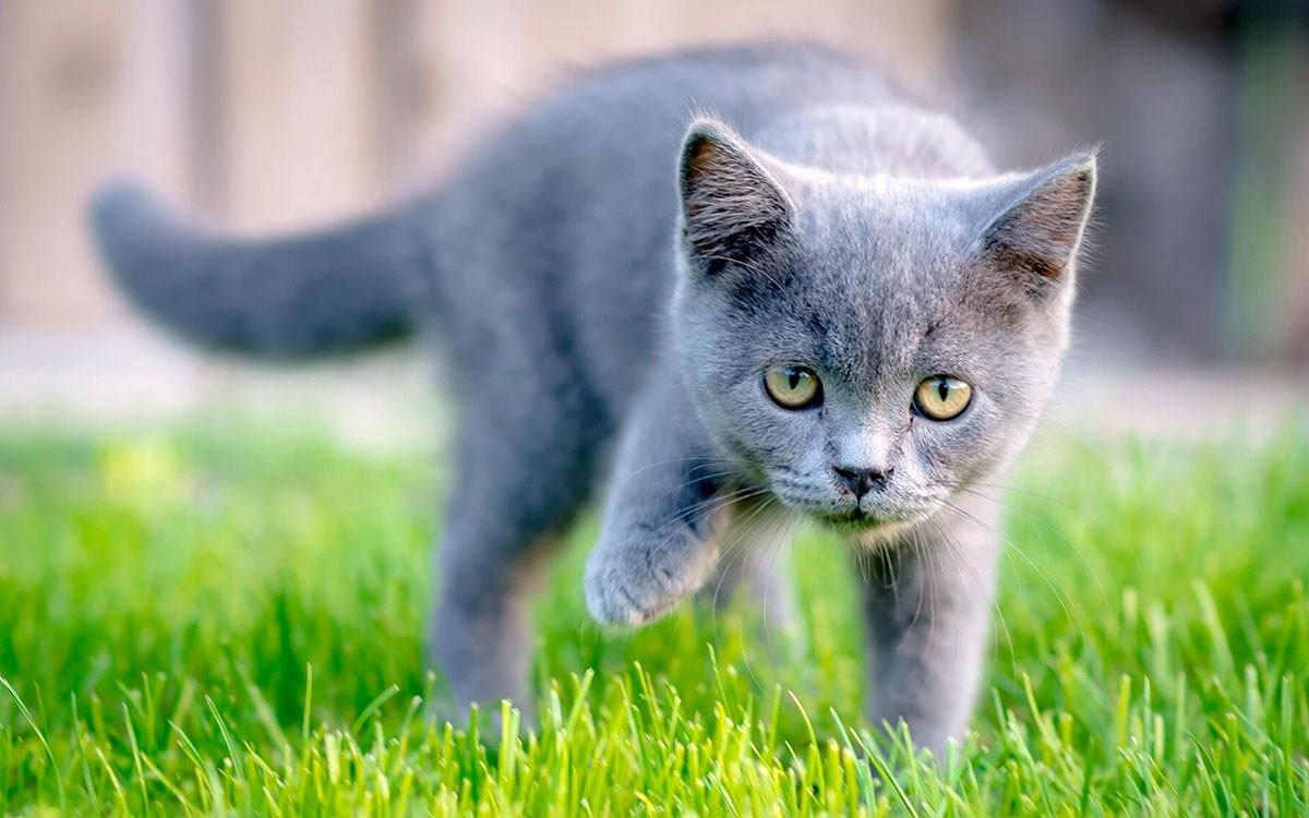 Имена для серых кошек и котов