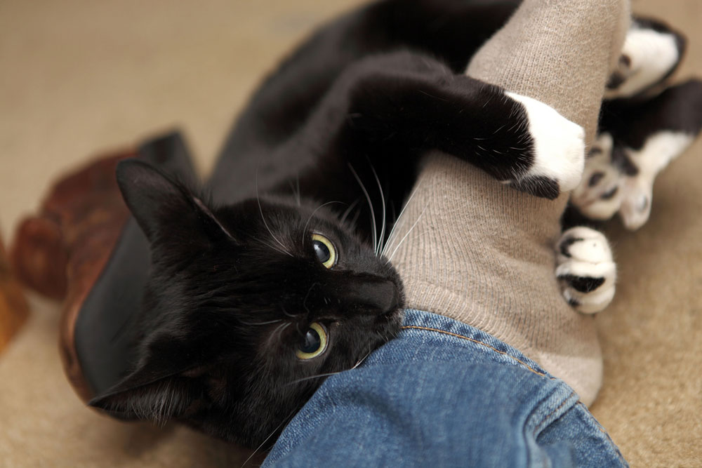 Почему кошка кусает за ноги?