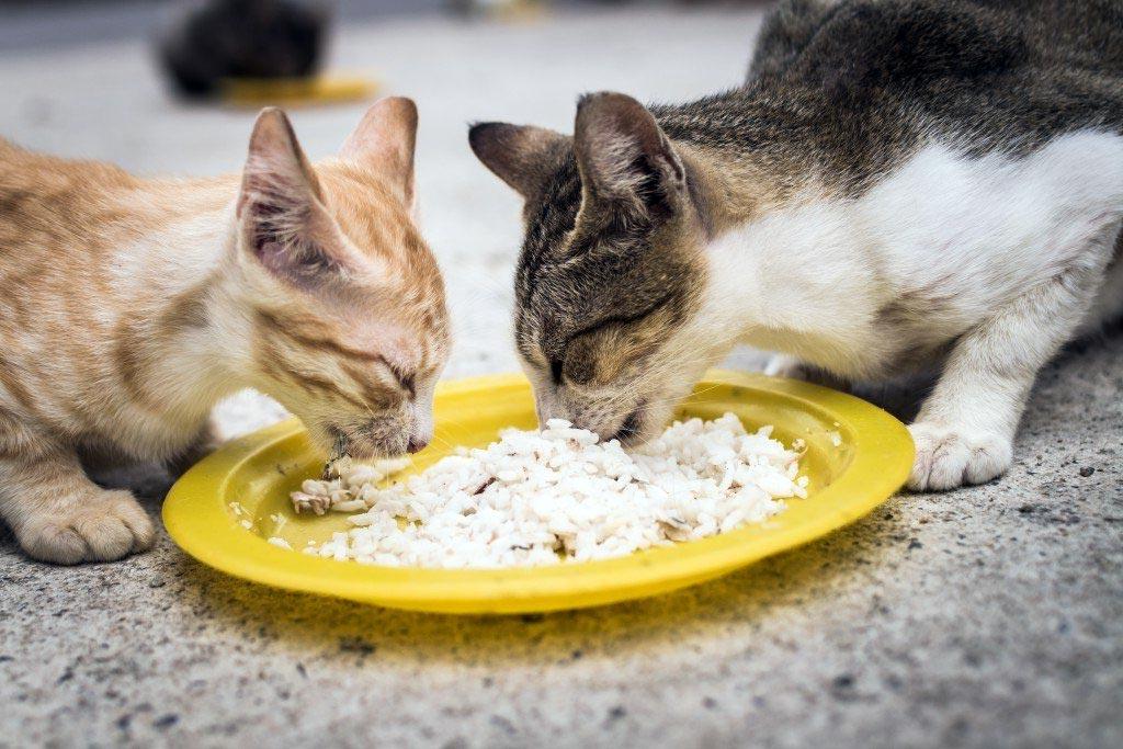 Какие каши можно давать кошкам, а какие нельзя.