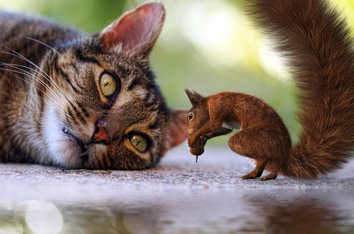 Едят ли кошки белок?