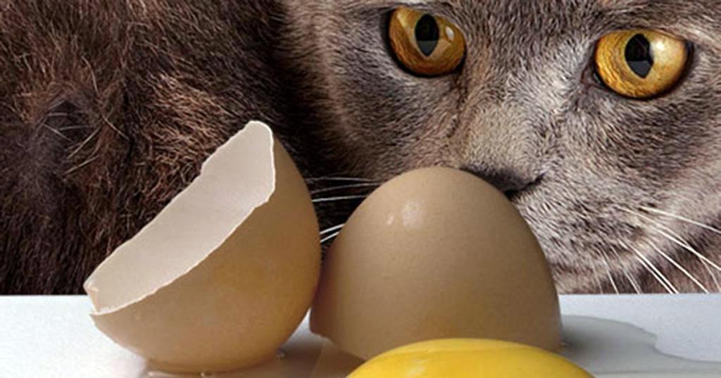 Можно ли кошкам яйца?