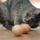 Можно ли купать кошек и как часто это делать?
