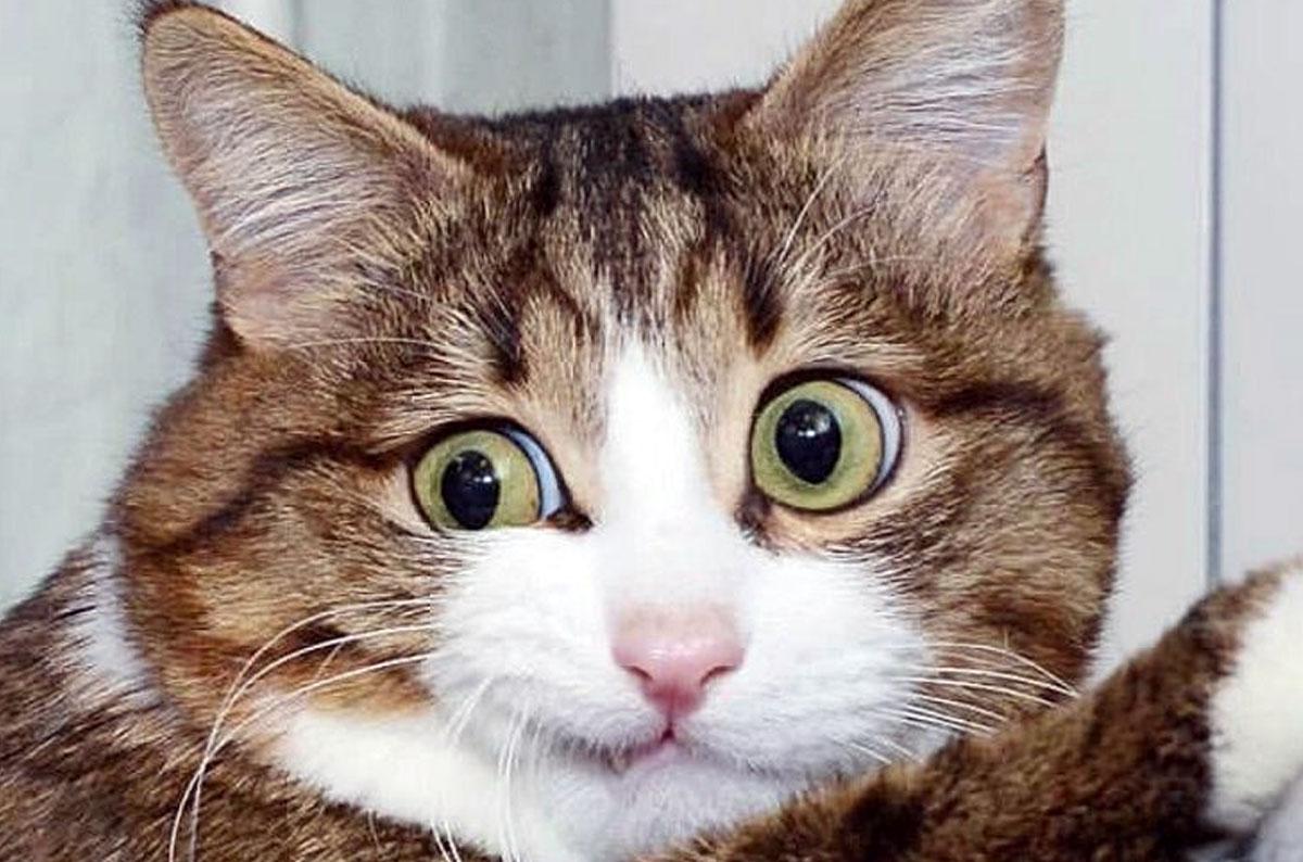 Почему кошка не откликается на имя?
