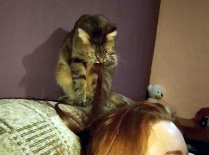 Почему кошка лижет мои волосы на голове?