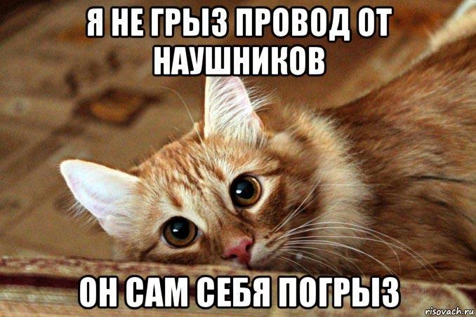 Как отучить кошку грызть провода?