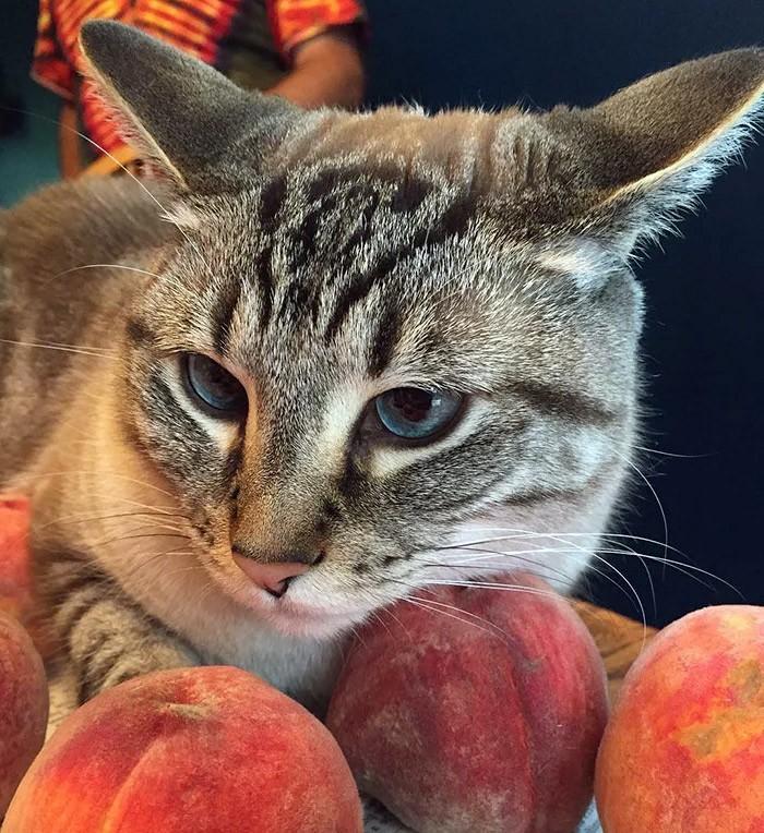 Можно ли кошке персики?