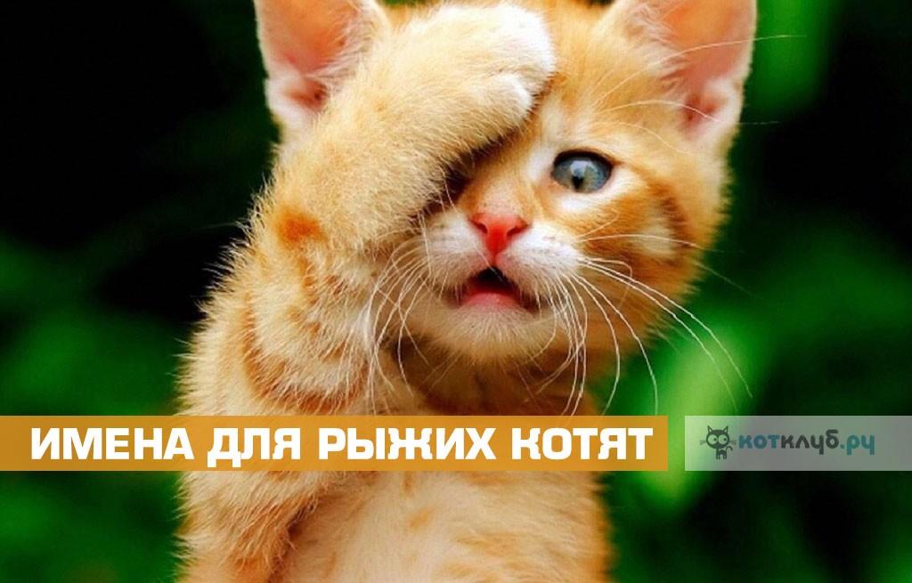 Имена для рыжих котят