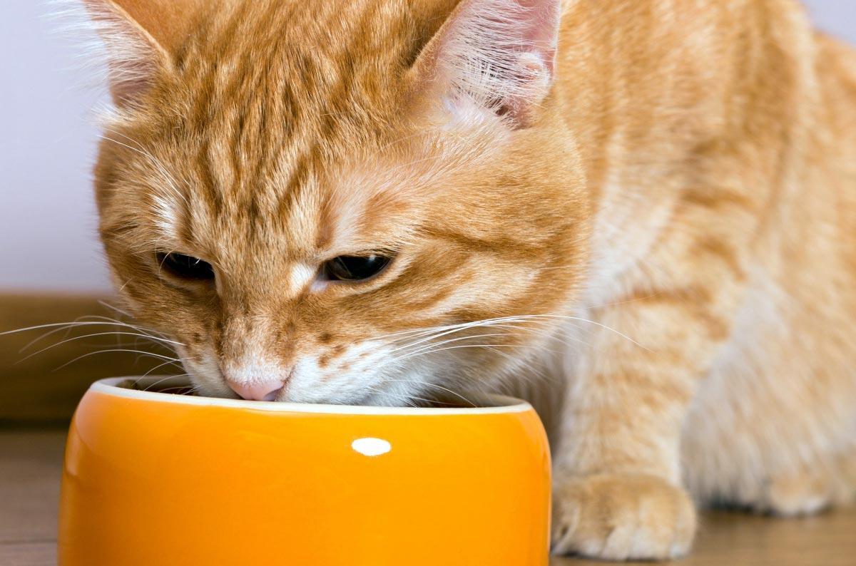 Рецепты домашней еды для кошек