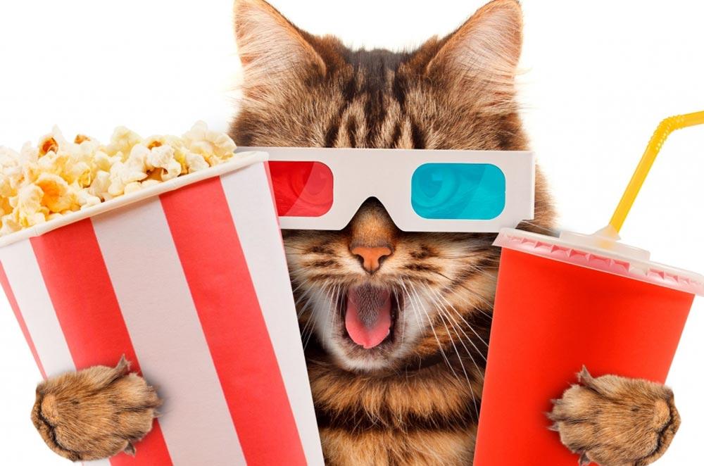 Можно ли кошке попкорн?