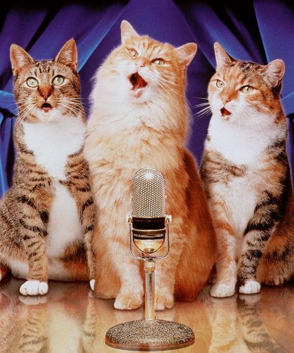 У кошки пропал голос