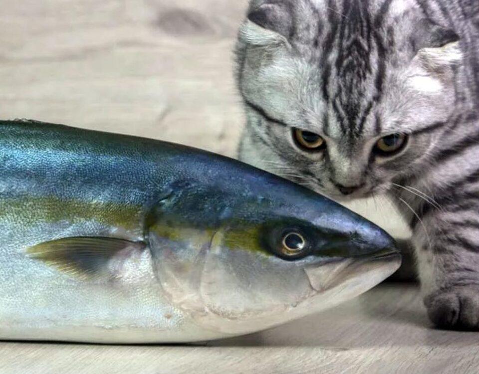 Могут ли кошки есть тунец