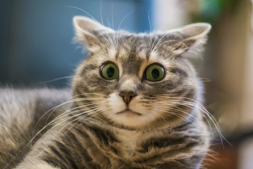Почему кошка сидит в углу?